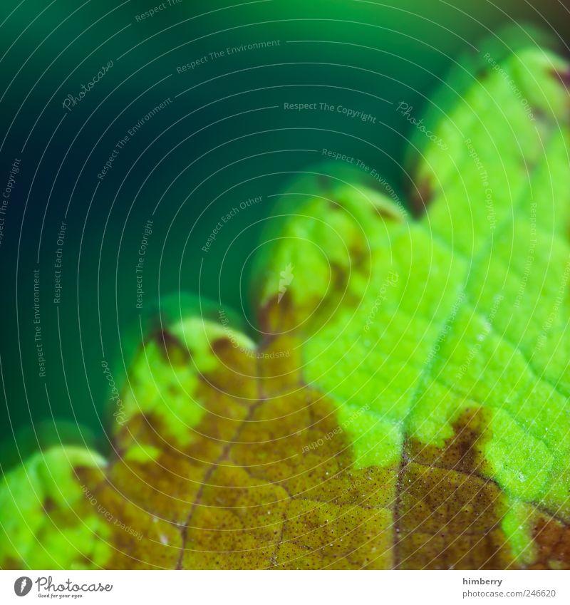 vital capacity Leben Umwelt Natur Pflanze Blatt Grünpflanze Umweltverschmutzung Verfall Vergänglichkeit Wachstum Farbfoto mehrfarbig Außenaufnahme Nahaufnahme