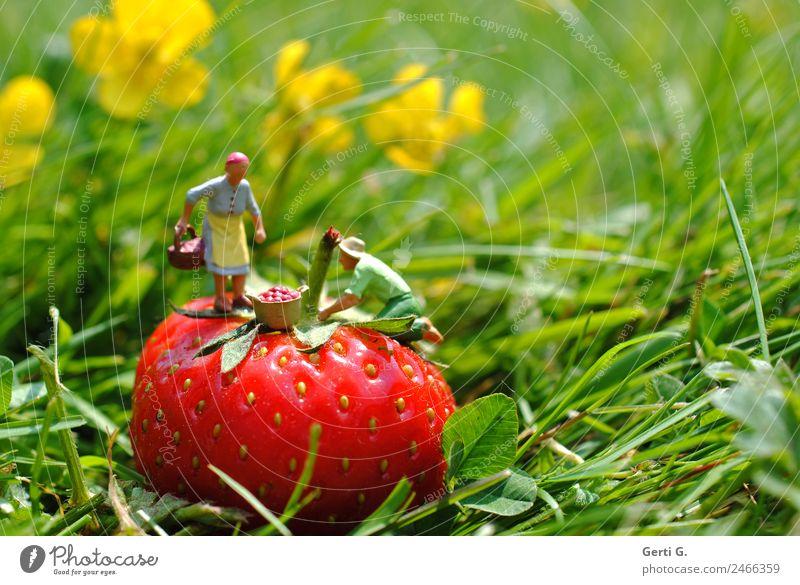 Miniaturfiguren - ErdbeerPflücker Mensch Natur grün rot gelb natürlich Wiese feminin Gras klein Garten Arbeit & Erwerbstätigkeit Frucht maskulin Ernährung