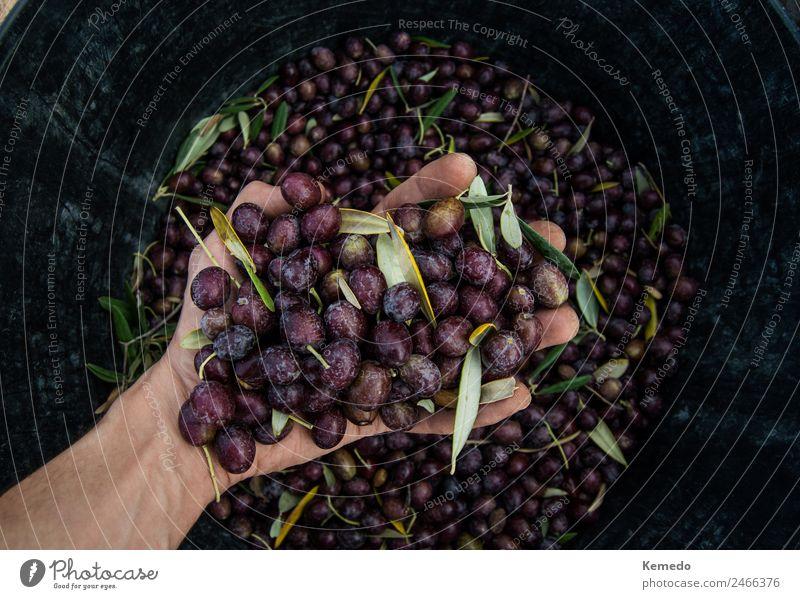 Hand des kleinen Jungen voller schwarzer Oliven Lebensmittel Gemüse Frucht Ernährung Bioprodukte Vegetarische Ernährung Lifestyle Körper