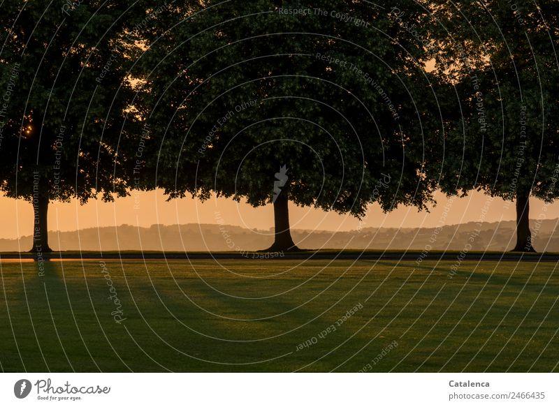 Emotionen | ein Tag geht zu Ende Natur Landschaft Pflanze Wolkenloser Himmel Sonnenaufgang Sonnenuntergang Sommer Schönes Wetter Baum Gras Park Wiese Hügel
