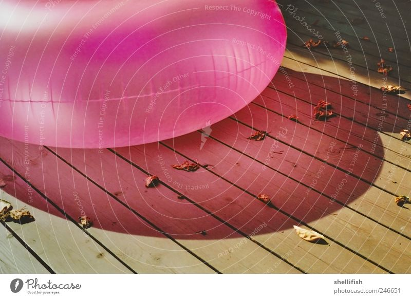 Rosa Luftwurst Sommer Blatt ruhig Erholung Holz hell See rosa sitzen ästhetisch Schwimmen & Baden Luftballon Stuhl Idylle leuchten
