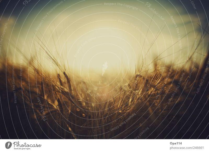 In the field Natur blau Sonne Pflanze Sommer ruhig Tier gelb Landschaft Umwelt braun Feld warten gold fest beobachten
