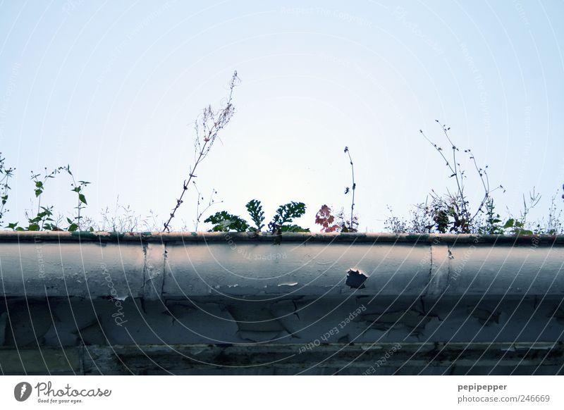 feuchtbiotop Umwelt Natur Pflanze Wasser Himmel Wolkenloser Himmel Sonnenlicht Sommer Schönes Wetter Gras Moos Efeu Blatt Blüte Grünpflanze Dachrinne alt