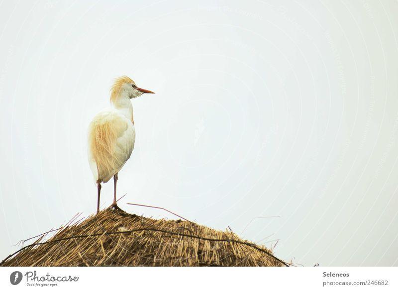 warum liegt hier eigentlich Stroh Himmel Ferne Tier Freiheit Vogel klein Zoo Wolkenloser Himmel