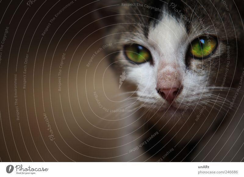 Kätzchen Haustier Katze Tiergesicht 1 beobachten Blick ruhig Fernweh Farbfoto Nahaufnahme Schatten Unschärfe Schwache Tiefenschärfe Tierporträt Blick nach vorn