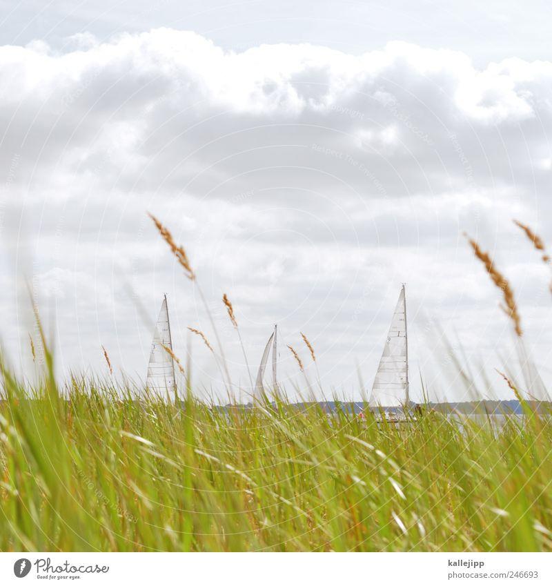 wonderful world Wasser Ferien & Urlaub & Reisen Sommer Wolken Ferne Freiheit Gras Küste Horizont Wind Freizeit & Hobby Ausflug Tourismus Lifestyle Segeln