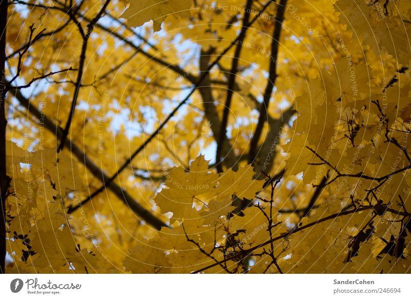 Herbst Natur Pflanze Baum Erholung Blatt ruhig schwarz Umwelt gelb Park Freizeit & Hobby elegant ästhetisch hoch Stadtrand