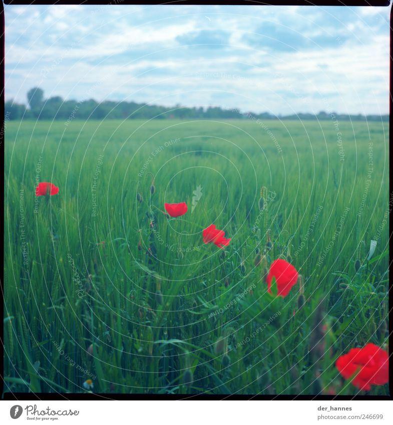 Ein bisschen Effet Himmel Natur Pflanze Sommer Blume Freude Blatt Wolken Umwelt Gefühle Gras Blüte Glück Wind Feld Schönes Wetter
