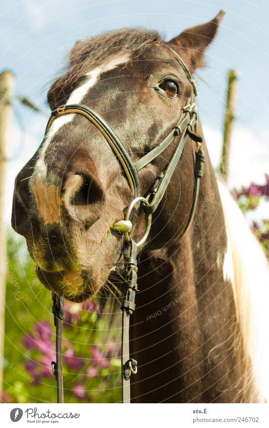 don't look me so strange on Natur schön Ferien & Urlaub & Reisen Pflanze Tier Umwelt Landschaft Kraft Freizeit & Hobby elegant Pferd beobachten Neugier Fell Tiergesicht Fressen