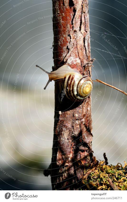 sNääääiL Natur Sommer Baum Tier Holz klein lang Schnecke Nutztier schleimig