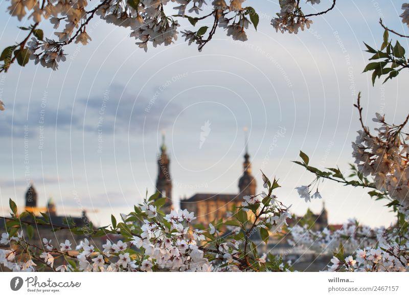 Dresden im Frühling historisch Abenddämmerung Kirschblüten Hofkirche Elbufer Residenzschloss
