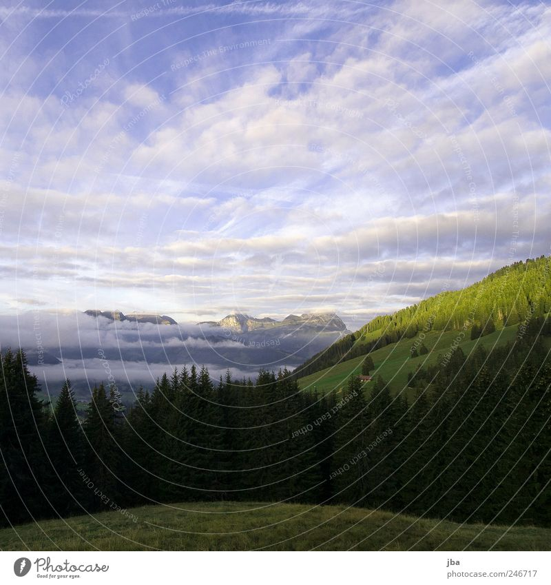 Morgenstimmung harmonisch Wohlgefühl Freiheit Berge u. Gebirge Natur Landschaft Himmel Wolken Schönes Wetter Tanne Felsen Alpen Saanenland Schweiz Erholung Wald