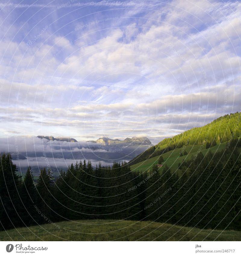 Morgenstimmung Himmel Natur Wolken ruhig Einsamkeit Wald Erholung Freiheit Berge u. Gebirge Landschaft Felsen Tourismus Alpen Schweiz Tanne Schönes Wetter