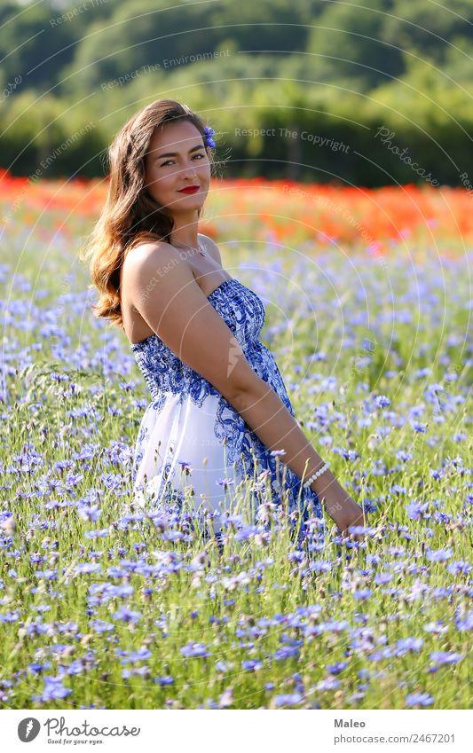 Im Kornblumenfeld Frau Jugendliche Junge Frau Korbblütengewächs Feld Mädchen blau Hintergrundbild schön Blüte Blumenstrauß Farbe Tag Pflanze Freiheit Gras grün