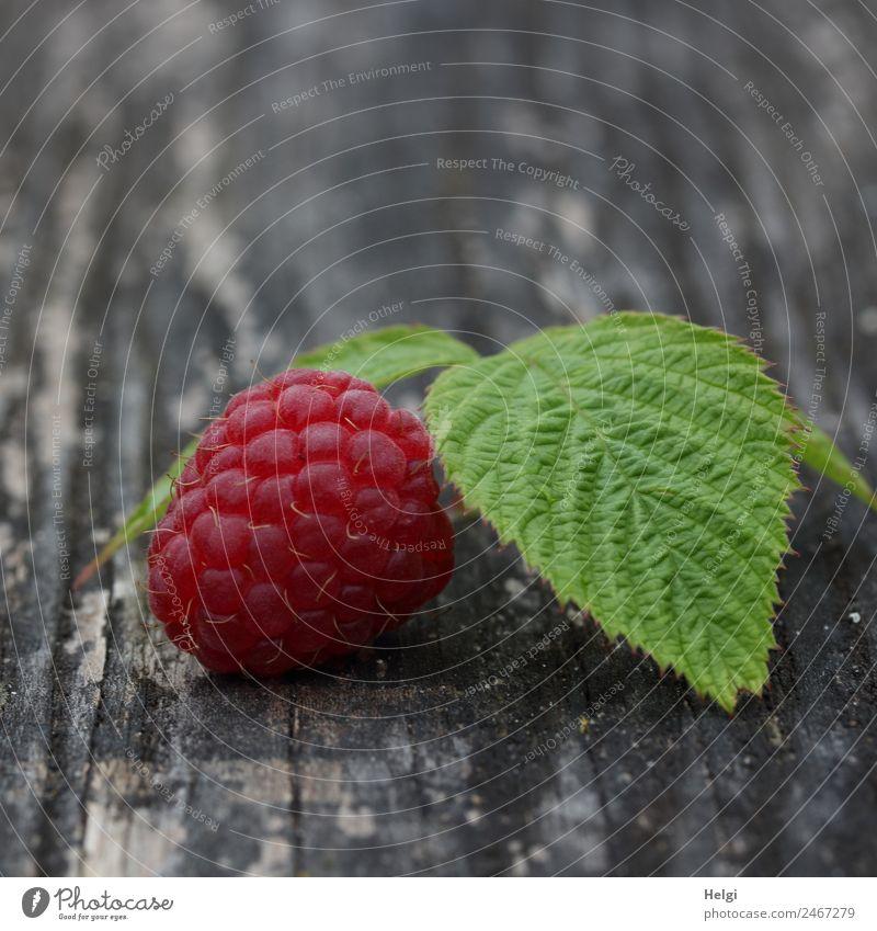 leckeres Früchtchen Lebensmittel Frucht Himbeeren Himbeerblätter Ernährung Bioprodukte Vegetarische Ernährung Blatt Holz liegen ästhetisch frisch Gesundheit