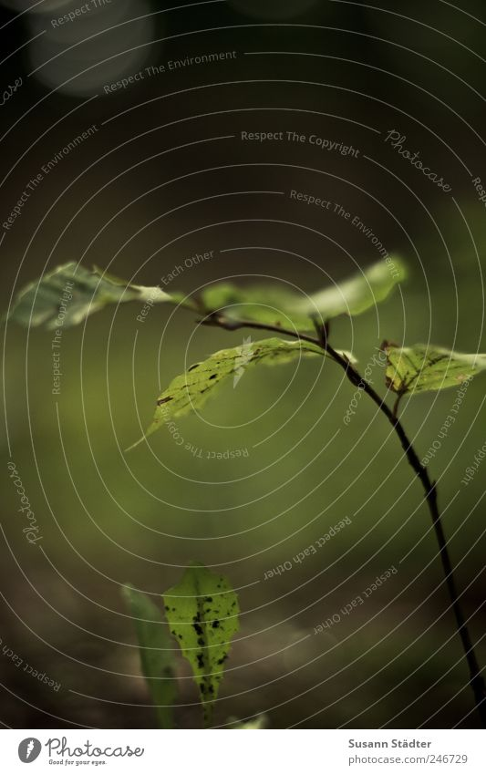 Das Herz ist ein dunkler Wald. klein Erde Wachstum Löwenzahn atmen Ahornblatt Waldboden Heide Wachstumsrate