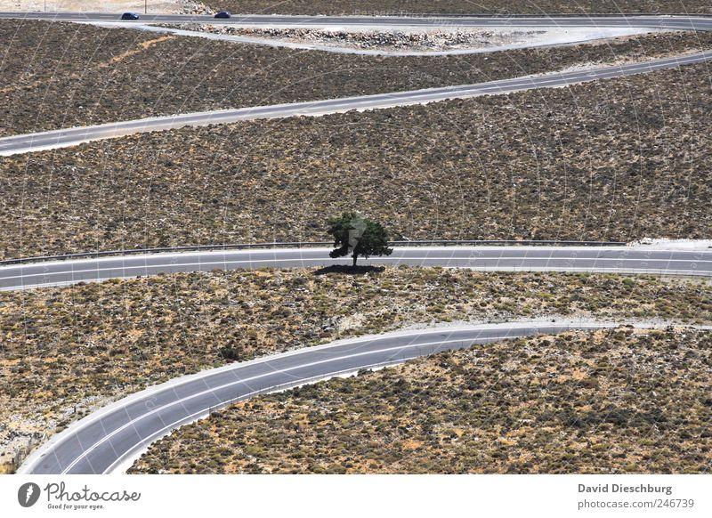 Ganz alleine gewachsen Natur grün Baum Pflanze Sommer Landschaft Straße Linie braun einzigartig einzeln Schönes Wetter Hügel trocken Verkehrswege Straßenverkehr