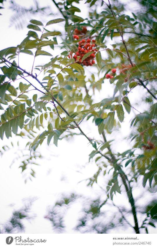 schöne welt rot Blatt Umwelt Frucht Wachstum Wildpflanze