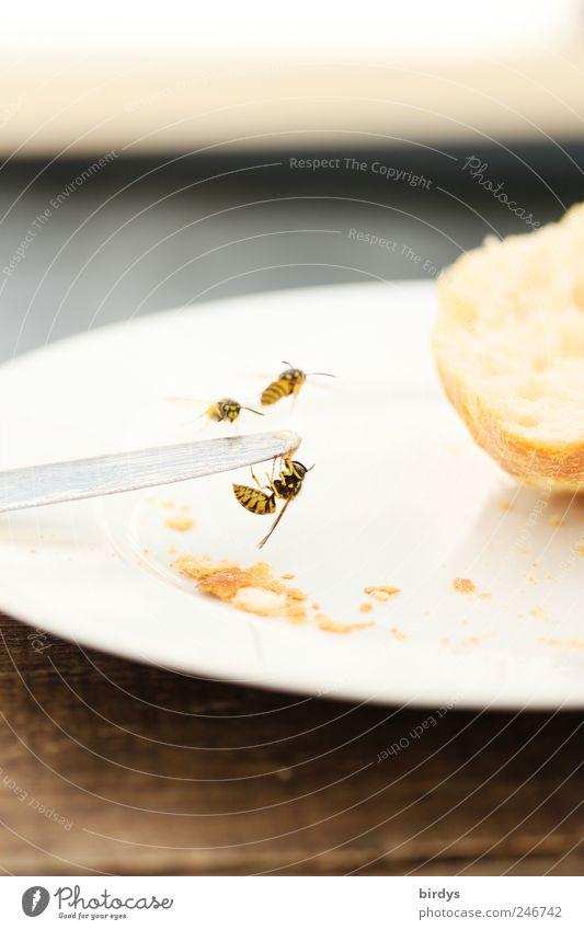 Wer frühstückt schon gern allein Natur Tier Tisch süß bedrohlich Insekt Frühstück Teller hängen Fressen Brötchen Messer Ekel Aggression Wespen gefräßig