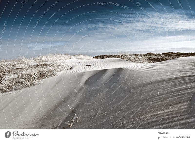Spiekeroog | ...velvety Himmel Natur Strand Erholung Umwelt Sand Nordsee Düne entdecken