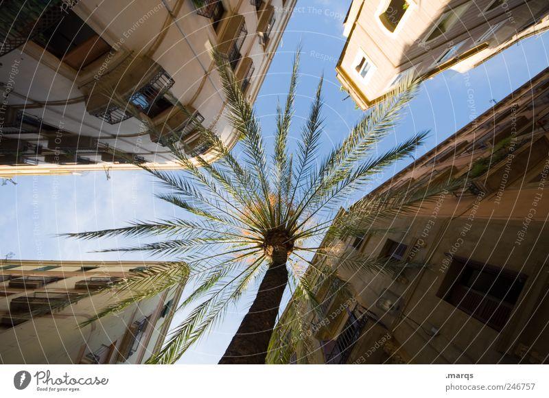 Southern Comfort Ferien & Urlaub & Reisen Städtereise Sommerurlaub Himmel Palme Barcelona Spanien Stadtzentrum bevölkert Haus Gebäude Architektur Fassade