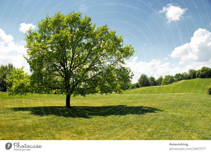 Baum Umwelt Natur Landschaft Pflanze Himmel Wolken Sommer Wetter Schönes Wetter Gras Park Wiese Hügel alt groß blau grün weiß Laubbaum Horizont Farbfoto