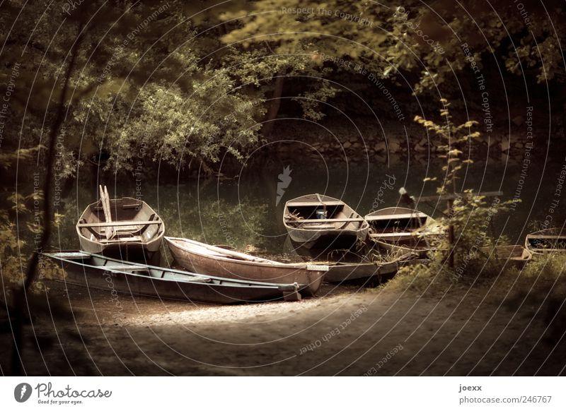 Fischeridyll Natur Wasser alt grün Sommer ruhig Wald braun Freizeit & Hobby retro Idylle Flussufer Wasserfahrzeug Paddel Fischerboot Kahn