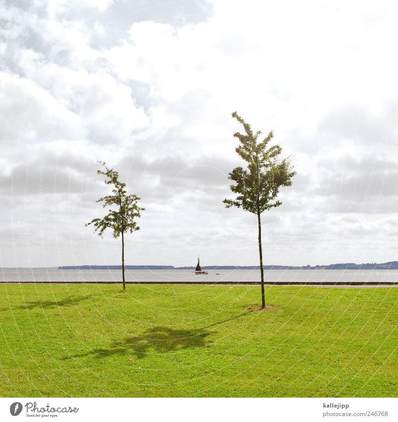 baumgrenze Wasser Baum Meer Wiese Wasserfahrzeug Horizont Freizeit & Hobby paarweise Lifestyle Ostsee Segeln Schifffahrt Segelboot Jacht Dänemark Ruderboot