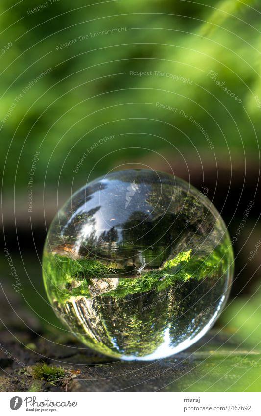 Quellwasser gegen die Schwerkraft Leben harmonisch Natur Wasser Brunnen Glas Kugel kugelrund liegen grün Kraft Hoffnung Erfrischung Glaskugel Klarheit