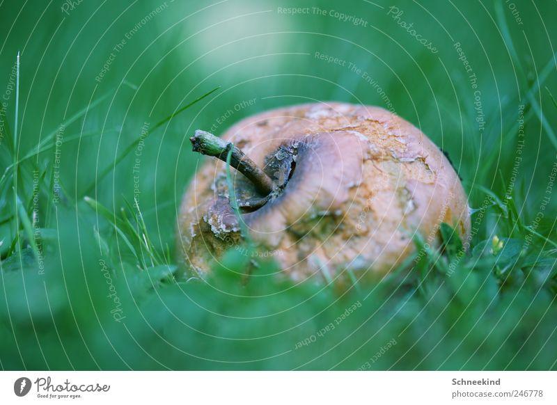 Vitamine Natur alt grün Umwelt Gras Garten Park braun Frucht Lebensmittel Ernährung Apfel Bioprodukte verdorben Grünpflanze Rohkost