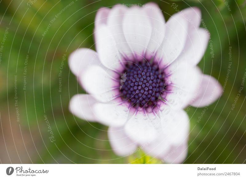 Natur Sommer Pflanze schön Farbe Sonne weiß Blume dunkel gelb Umwelt Herbst Frühling Blüte natürlich Wiese