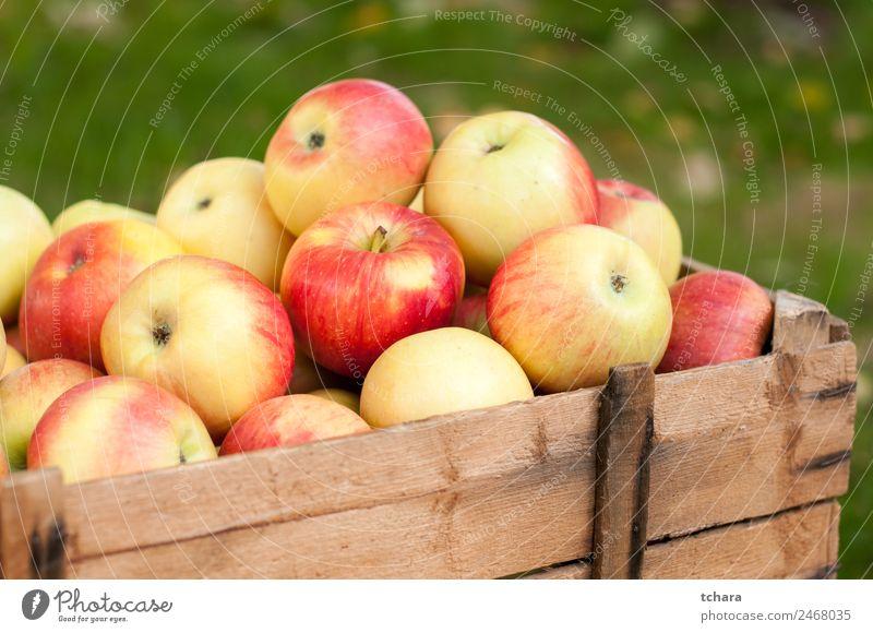 Reife Äpfel Frucht Apfel Ernährung Diät Natur Herbst Baum Blatt Container Verpackung Holz alt frisch lecker natürlich gelb gold grün rot Farbe Ernte Kiste