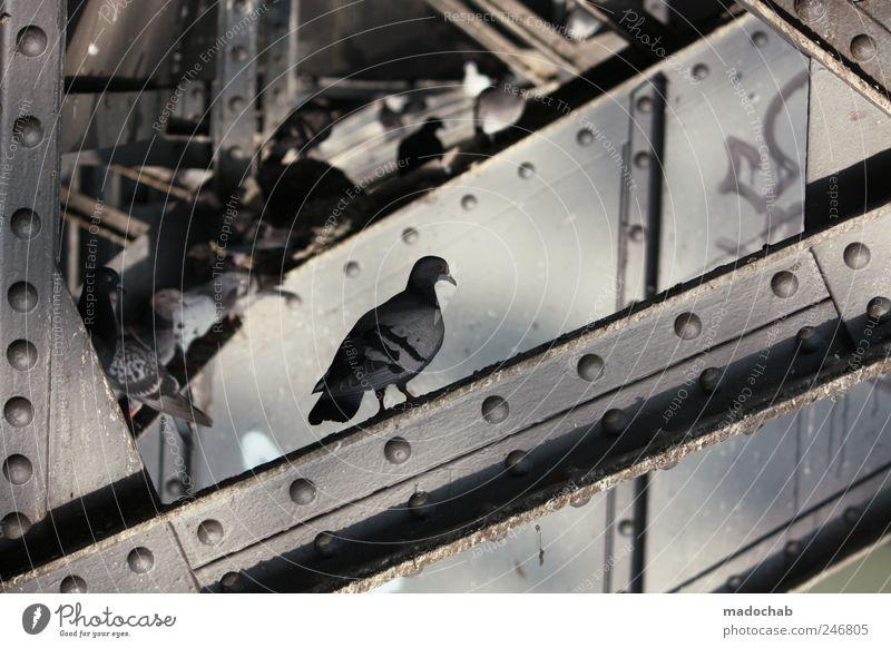 Shit-In Tier grau Vogel Wohnung sitzen Verkehr trist Häusliches Leben Tiergruppe Güterverkehr & Logistik Stahl trashig chaotisch bizarr Taube hässlich