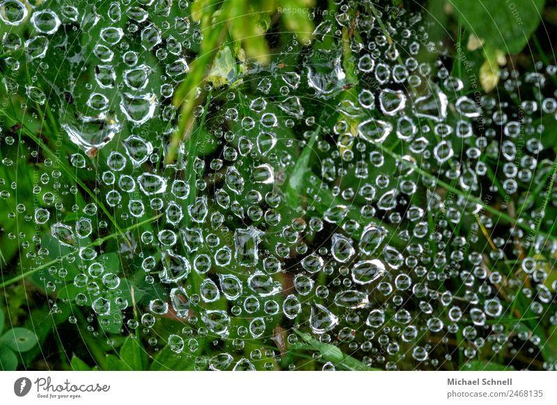 Tropfen im Spinnennetz Natur Wasser grün Umwelt natürlich Wiese Regen ästhetisch Wassertropfen nass Flüssigkeit Tau