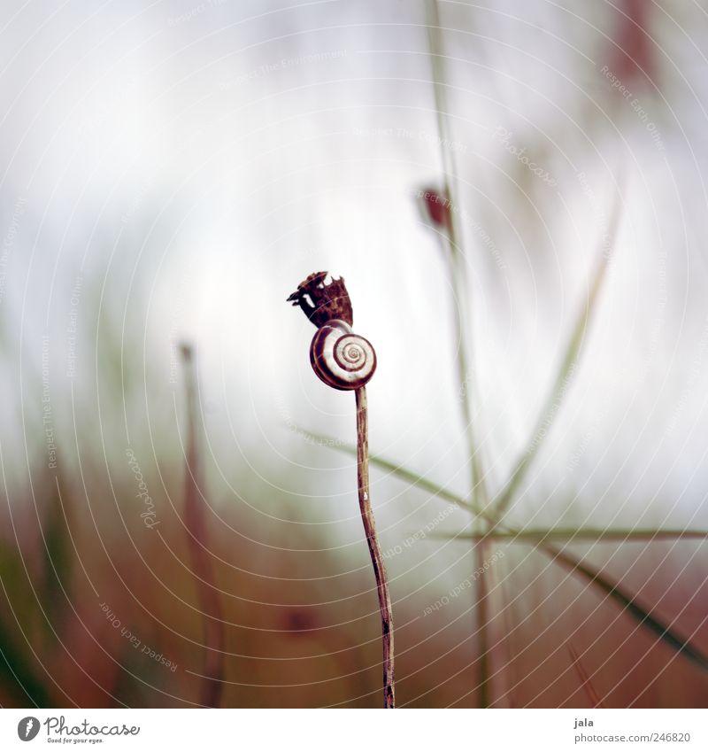 schnecklein Umwelt Natur Landschaft Pflanze Tier Himmel Gras Sträucher Wildpflanze Wildtier Schnecke Schneckenhaus 1 natürlich Farbfoto Außenaufnahme