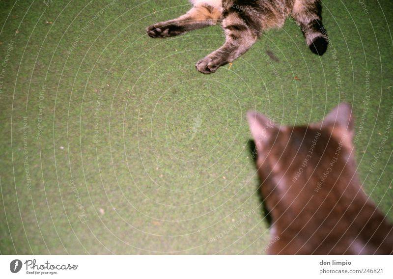 wir wollen in die top-10 grün Tier Erholung träumen Katze Tierpaar schlafen liegen Pause nah trashig Haustier bequem Trägheit