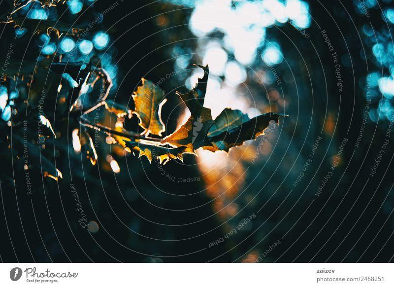 Blätter im Dunkel eines Waldes, der in der Natur von einem Sonnenstrahl beleuchtet wird Winter Berge u. Gebirge Garten Tapete Pflanze Herbst Baum Blatt Park