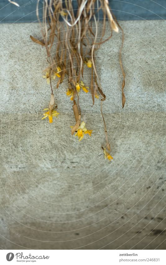 Verblüht Garten Umwelt Natur Pflanze Herbst Klima Klimawandel Blume Blüte Grünpflanze Nutzpflanze Topfpflanze Haus Bauwerk Gebäude Mauer Wand Traurigkeit Sorge