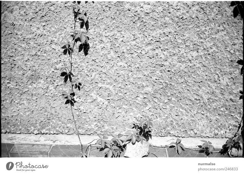 Grafikranke Natur Pflanze Leben dunkel Wand Umwelt Garten Mauer Stimmung Kunst Zeit Wohnung Fassade Beginn Wachstum geheimnisvoll