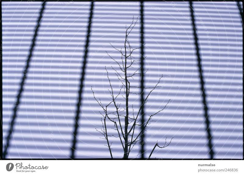 Natur gebannt Baum dunkel Umwelt Stimmung Kunst Angst Klima Wachstum verrückt trist Technik & Technologie Vergänglichkeit Unendlichkeit Zeichen gruselig
