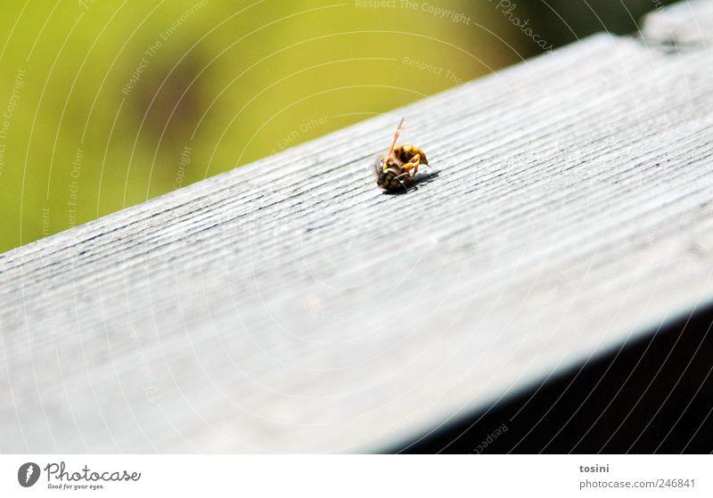 Tatort Tier Wildtier Totes Tier Flügel 1 liegen grün Wespen Tod Holz Farbfoto Außenaufnahme Nahaufnahme Makroaufnahme Menschenleer Textfreiraum links
