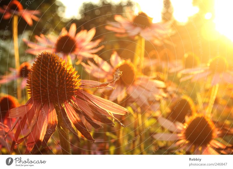 Ein letzter Sommertag Natur grün schön Pflanze Blume gelb Erholung Herbst Blüte Garten Stimmung Wärme rosa Gelassenheit welk