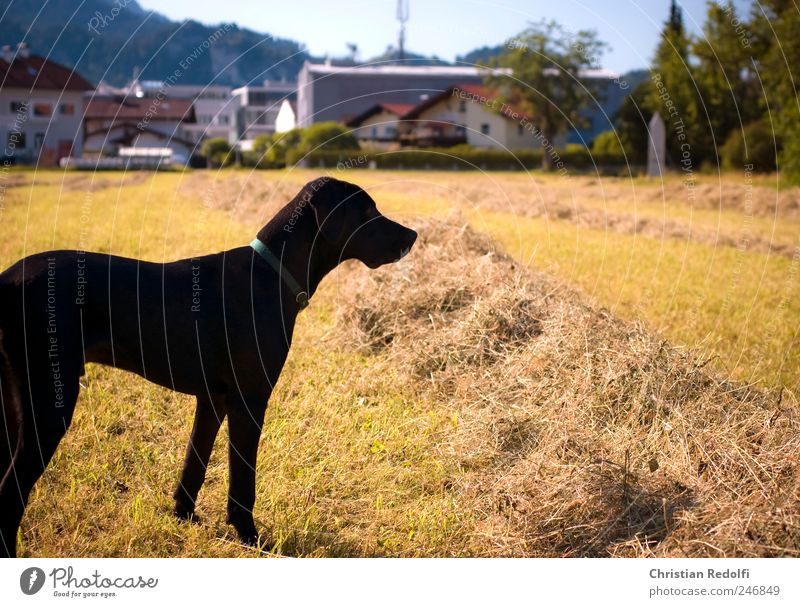 doglife Hund Himmel Natur Sommer Tier Landschaft Wiese Spielen Gras springen Glück Feld Fröhlichkeit Unendlichkeit dünn Jagd