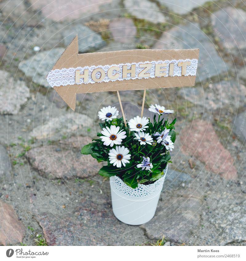 <- Design Freizeit & Hobby Dekoration & Verzierung Party Feste & Feiern Hochzeit Blume Topfpflanze Blumentopf Terrasse Wege & Pfade Pflasterweg trashig Stadt