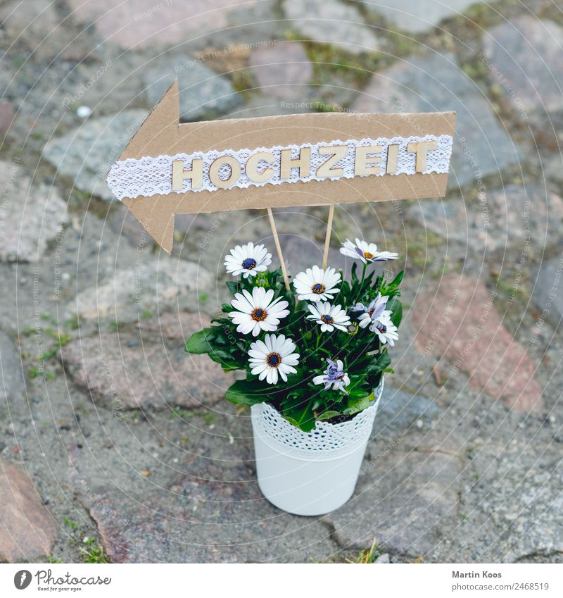 <- Stadt grün Blume Religion & Glaube Liebe Wege & Pfade Party Feste & Feiern Design Freizeit & Hobby Dekoration & Verzierung Idylle Hochzeit Pfeil Tradition