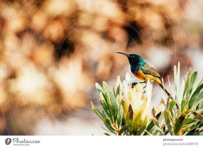 Natur Pflanze Farbe grün Blume Tier Berge u. Gebirge Essen gelb Blüte Garten Vogel Wildtier Erfolg exotisch Schnabel