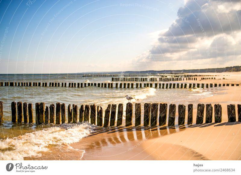 Ostseestrand in Polen Ferien & Urlaub & Reisen Sommer Strand Post Natur Sand Küste maritim Tourismus Buhnen alt Sandstrand Brandung Wolken Wolkenzug blau Himmel