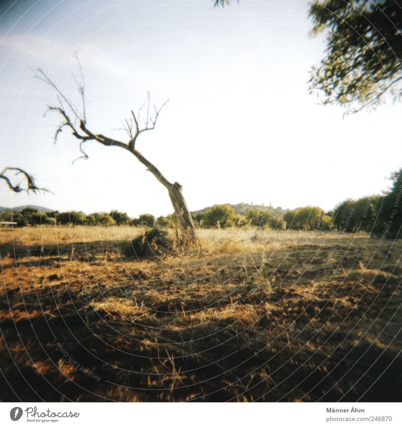 Hier und dort... Himmel Natur alt Wiese Berge u. Gebirge Landschaft Erde Feld trocken Mallorca stagnierend Wildpflanze