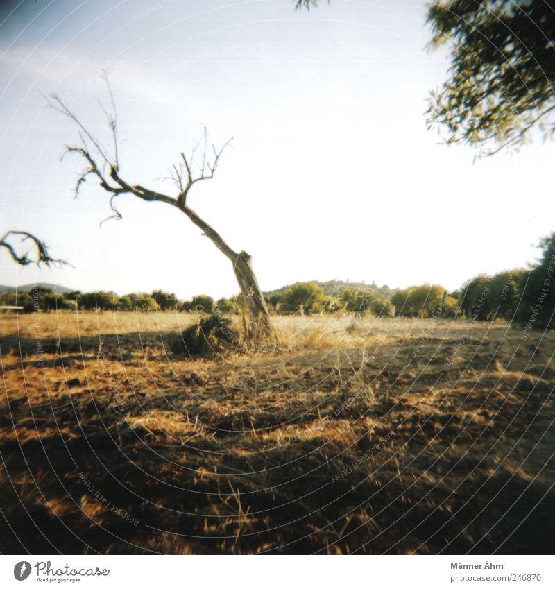 Hier und dort... Natur Landschaft Himmel Wildpflanze Wiese Feld alt trocken stagnierend Mallorca Berge u. Gebirge Erde Farbfoto Lomografie Holga Tag Licht