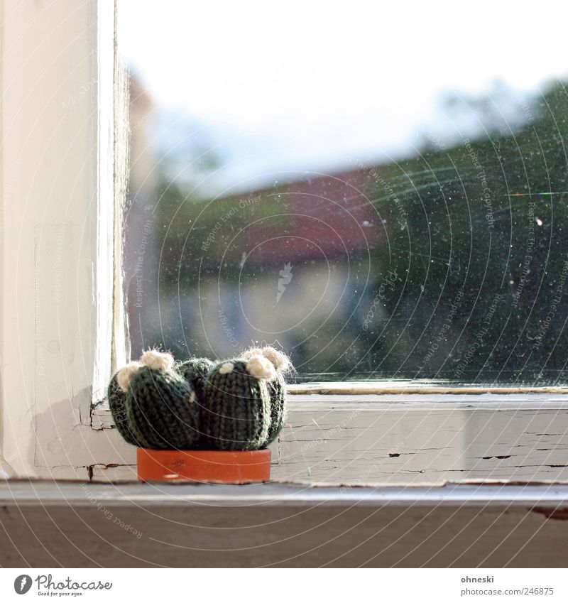 Handarbeit Pflanze Fenster dreckig Häusliches Leben Fensterscheibe Kaktus Wolle Zimmerpflanze Fensterbrett Fensterrahmen
